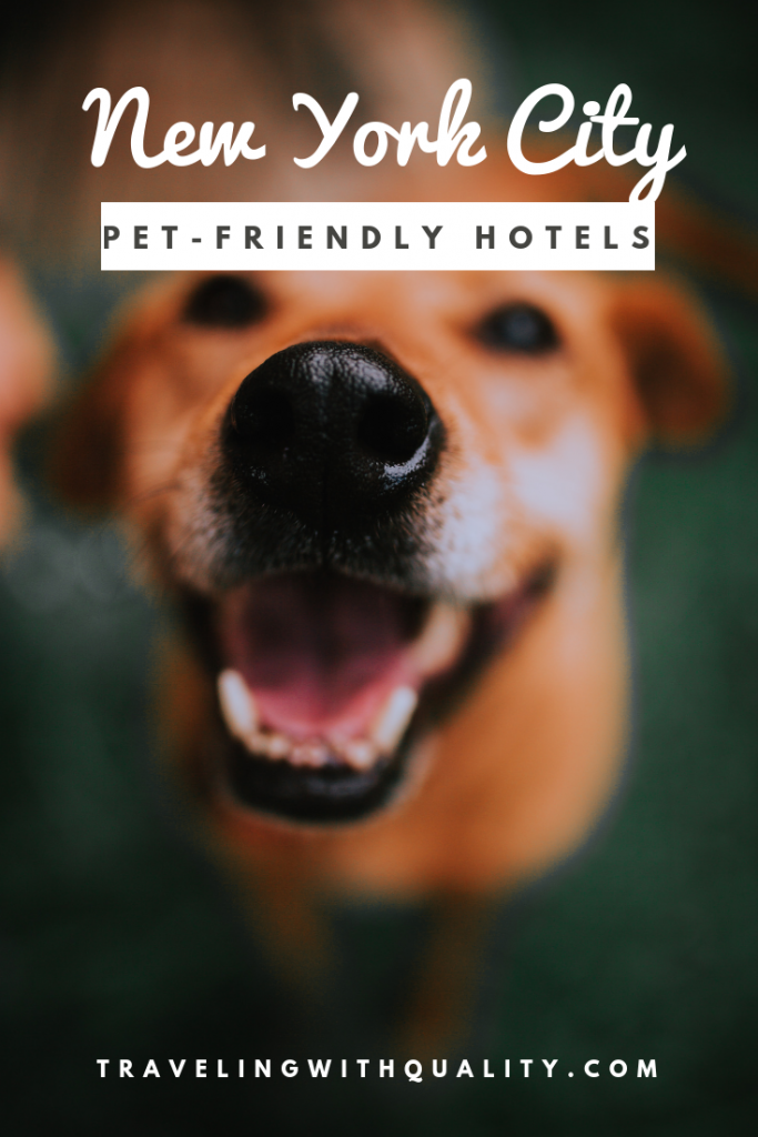 pet-friendly hotels nyc